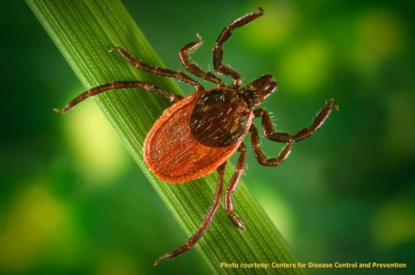 Ticks are Rapidly Becoming the World's Scariest Purveyors of Deadly Pathogens