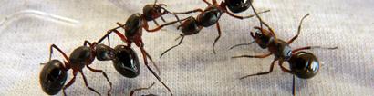 ants-3t