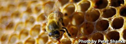 bee-comb