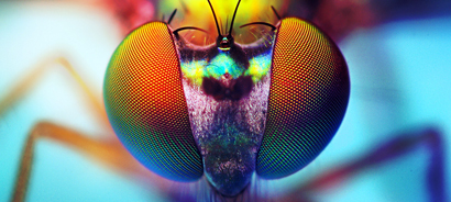 insect eyes – Entomology Today