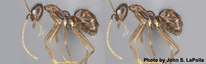 ant-oct26