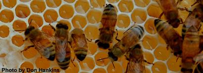 bees-vov25