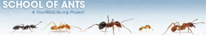 school-ants-wp