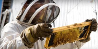column-beekeeper
