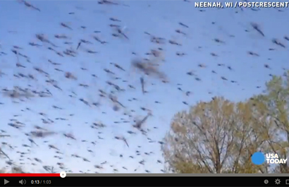 lake-flies