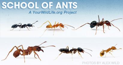 school-ants-feat