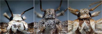 new-moths-wp