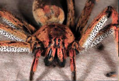 vetter-spider2