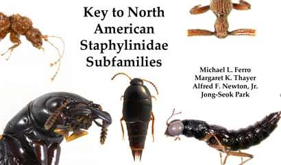 ferro-rove-beetles