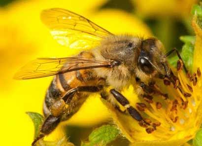 honey-bee234