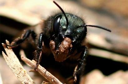 bee-soil