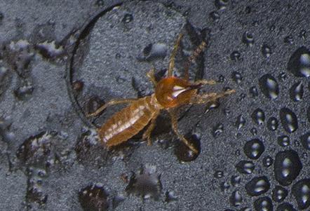 termite-jeff-cremer