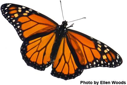 Butterflies - cover