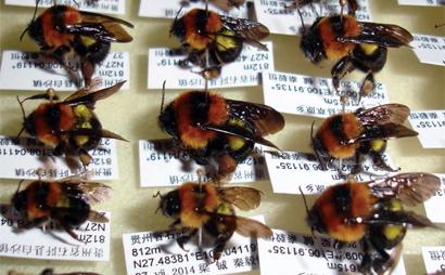 china-bees