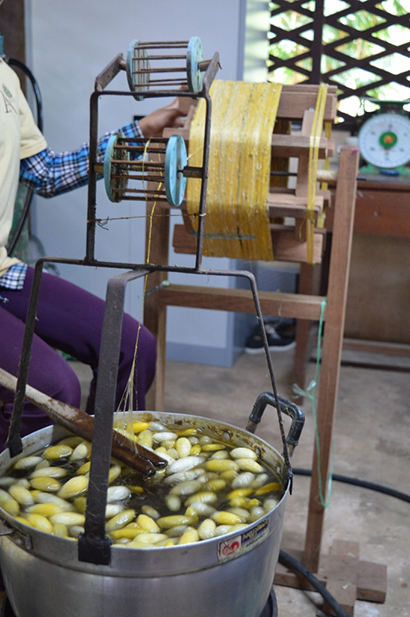 boiling silkworm cocoons