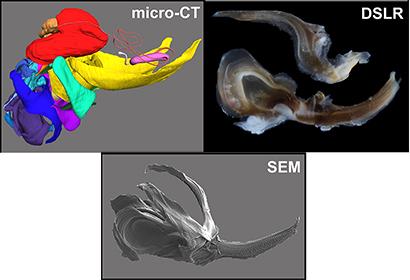 Examples of Correlative Microscopy Technologies