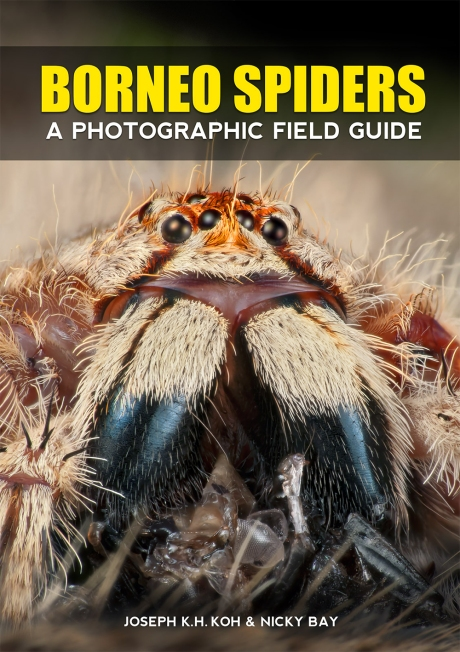 Borneo Spiders Field Guide Front Cover