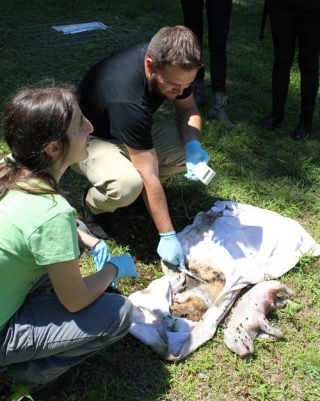 forensic entomology workshop