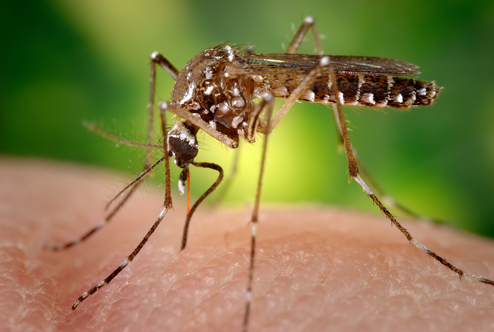 2017's First Case of Sexually Transmitted Zika in Florida