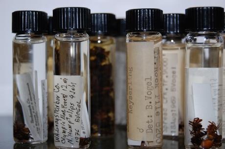 Colorado Spider Survey vials