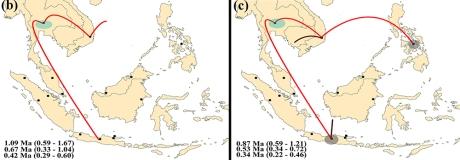 macrotermes gilvus dispersal maps